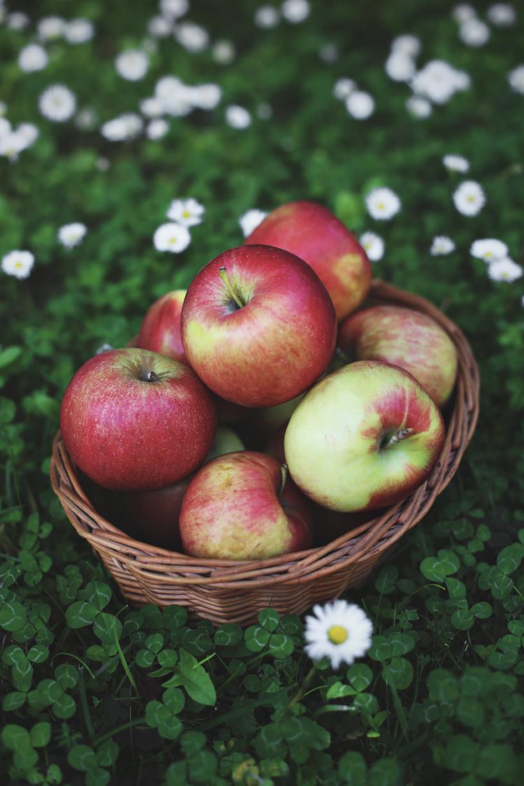 Pletenica sa jabukama i orasima